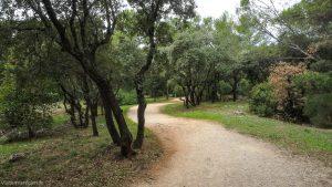 Bois De Montmaur Montpellier 11