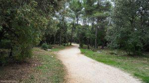 Bois De Montmaur Montpellier 12