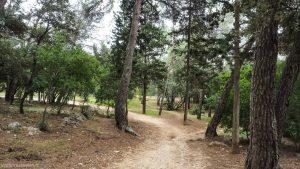 Bois De Montmaur Montpellier 13