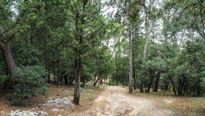 Bois De Montmaur Montpellier 22