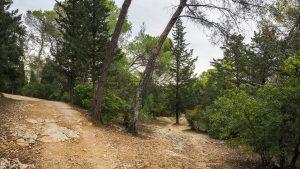 Bois De Montmaur Montpellier 23