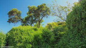 Jardin De La Motte A Mauguio 12