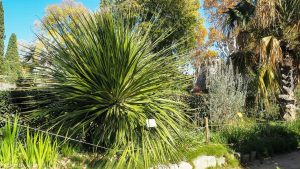 Jardin Des Plantes Montpellier 10