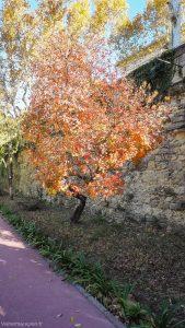 Jardin Des Plantes Montpellier 14