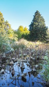 Jardin Des Plantes Montpellier 17