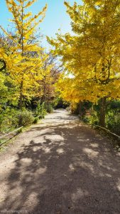 Jardin Des Plantes Montpellier 21