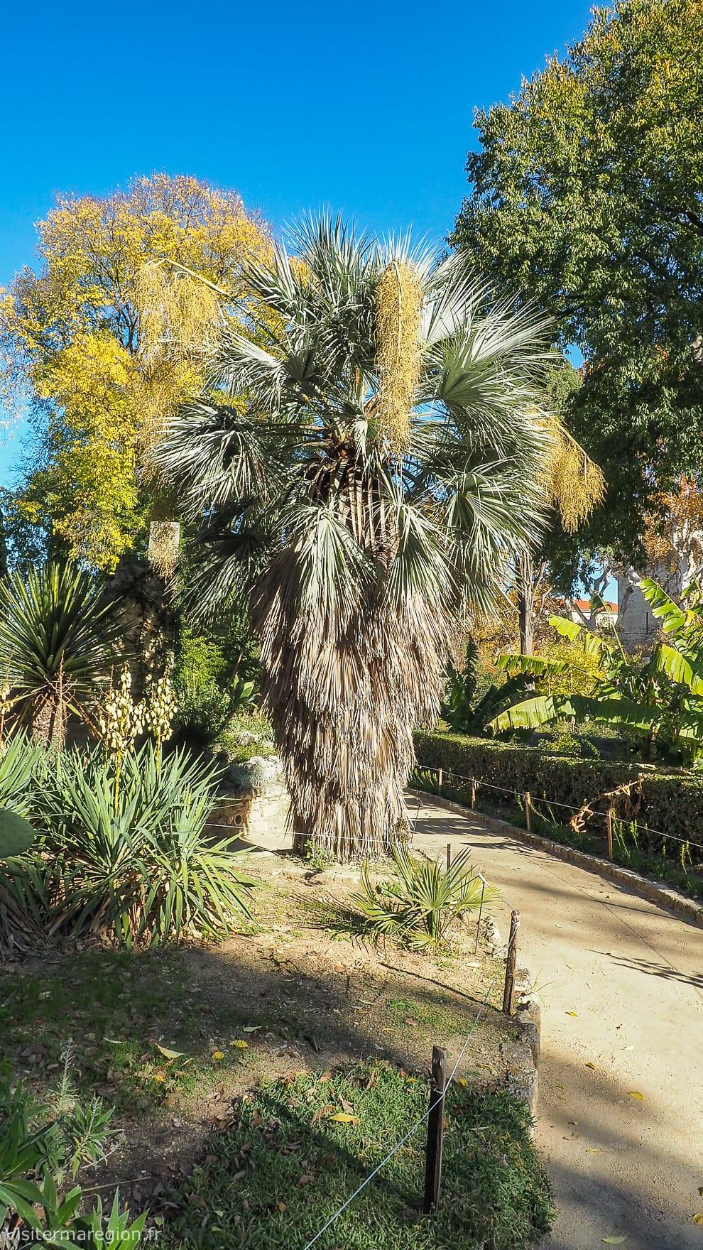 Jardin des plantes botanique de montpellier horaires - Le jardin des plantes montpellier ...