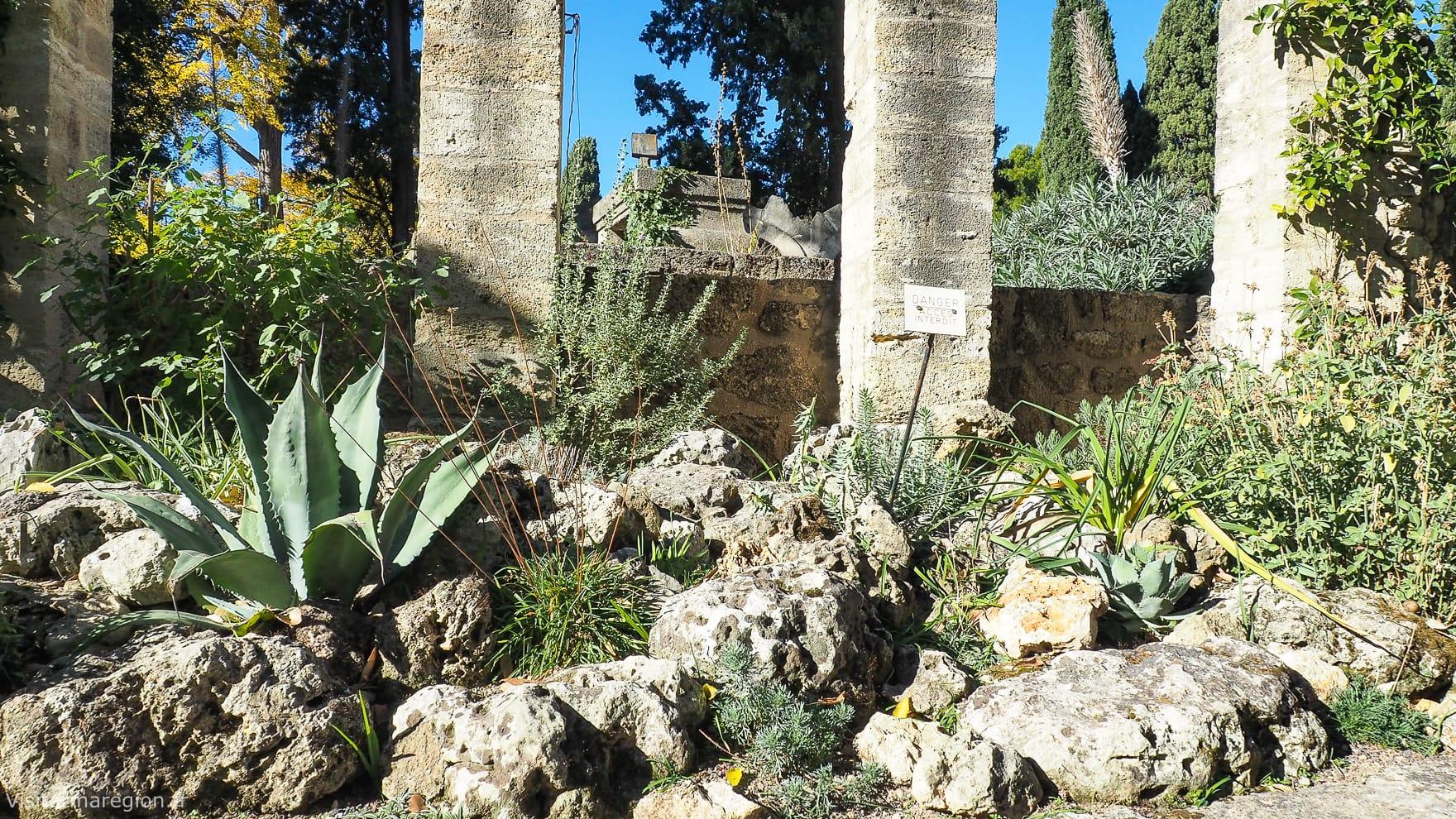 Jardin des plantes botanique de montpellier horaires - Jardin des plantes angers horaires ...