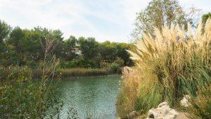 Lac Des Garrigues Montpellier 5