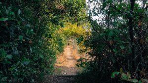 Les Jardins Dalco Montpellier 7