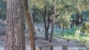 Parc De Coulondres Philippe Eldridge Saint Gely Du Fesc 19