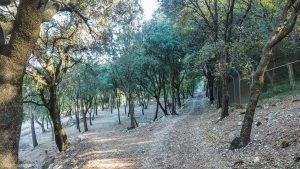 Parc De Coulondres Philippe Eldridge Saint Gely Du Fesc 7