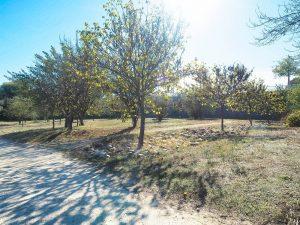 Parc De La Peyriere Saint Jean De Vedas 3