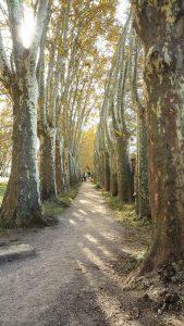 Parc Du Chateau Des Eveques Laverune 4