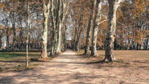 Parc Du Chateau Des Eveques Laverune 6
