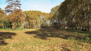 Parc Du Chateau Des Eveques Laverune 8