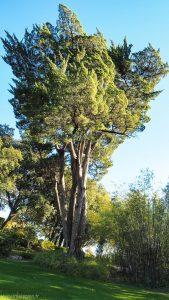Parc Du Terral Saint Jean De Vedas 13