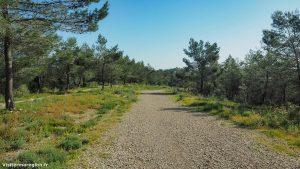 Randonnée Bois Saint Sauveur Saint Clement De Riviere 1