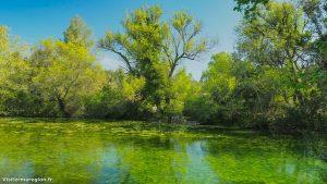Randonnée Bois Saint Sauveur Saint Clement De Riviere 12