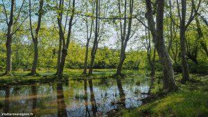 Randonnée Bois Saint Sauveur Saint Clement De Riviere 13