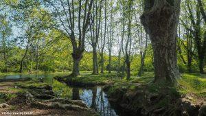 Randonnée Bois Saint Sauveur Saint Clement De Riviere 14