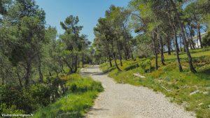 Randonnée Bois Saint Sauveur Saint Clement De Riviere 19