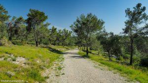 Randonnée Bois Saint Sauveur Saint Clement De Riviere 4