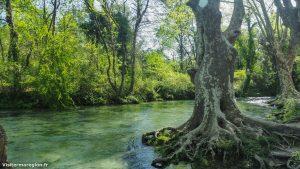 Randonnée Bois Saint Sauveur Saint Clement De Riviere 9
