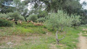 Randonnée De Laqueduc De Castries 4